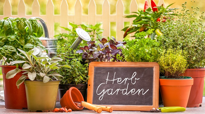 DIY Herb Garden Guide